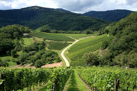 «Discover the wine road» - Two nights package